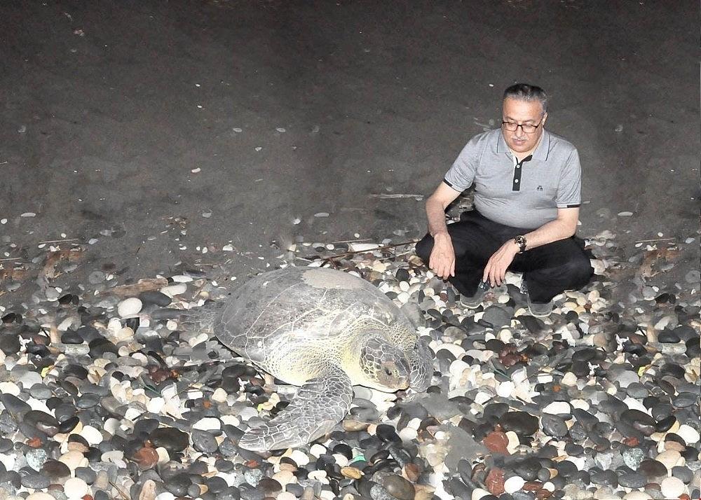 2018/07/deniz-kaplumbagalari-mersin-sahillerine-yumurta-birakmaya-devam-ediyor-20180718AW44-1.jpg