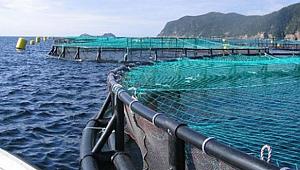 Su ürünleri yetiştiricilerine 52 milyon TL'lik destekleme ödemesi