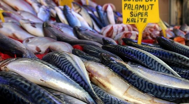 Balıkçılar palamudun yolunu gözlüyor