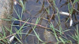 İnegöl'de Akçasu Deresi'nde de balık ölümleri görüldü