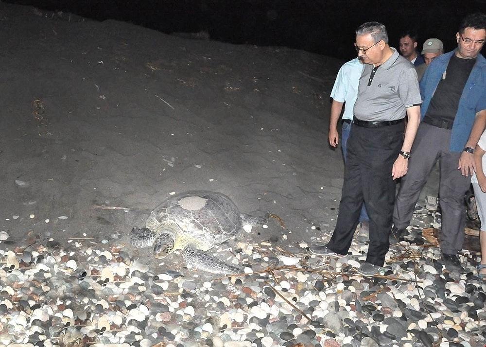 2018/07/deniz-kaplumbagalari-mersin-sahillerine-yumurta-birakmaya-devam-ediyor-20180718AW44-2.jpg