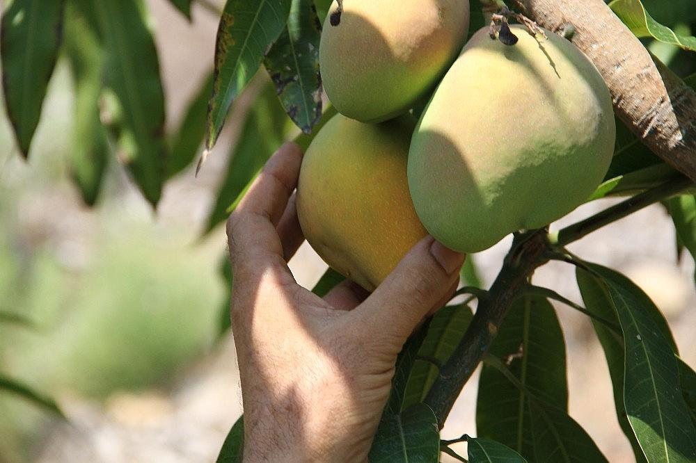 2018/09/alanyada-mango-hasadi-basladi-20180909AW48-5.jpg