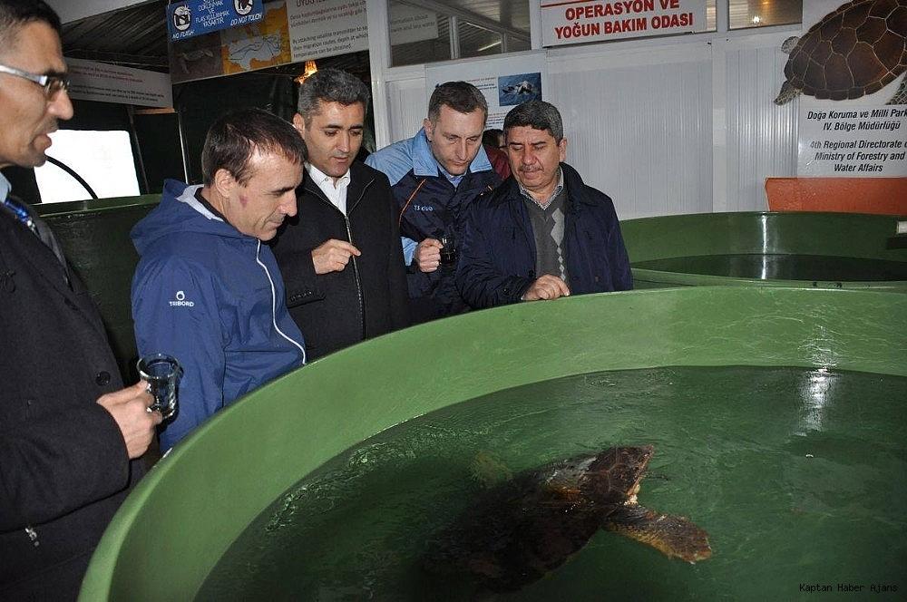 2018/10/deniz-kaplumbagalari-arastirma-merkezinin-kapanacagi-iddiasi-20181027AW52-3.jpg