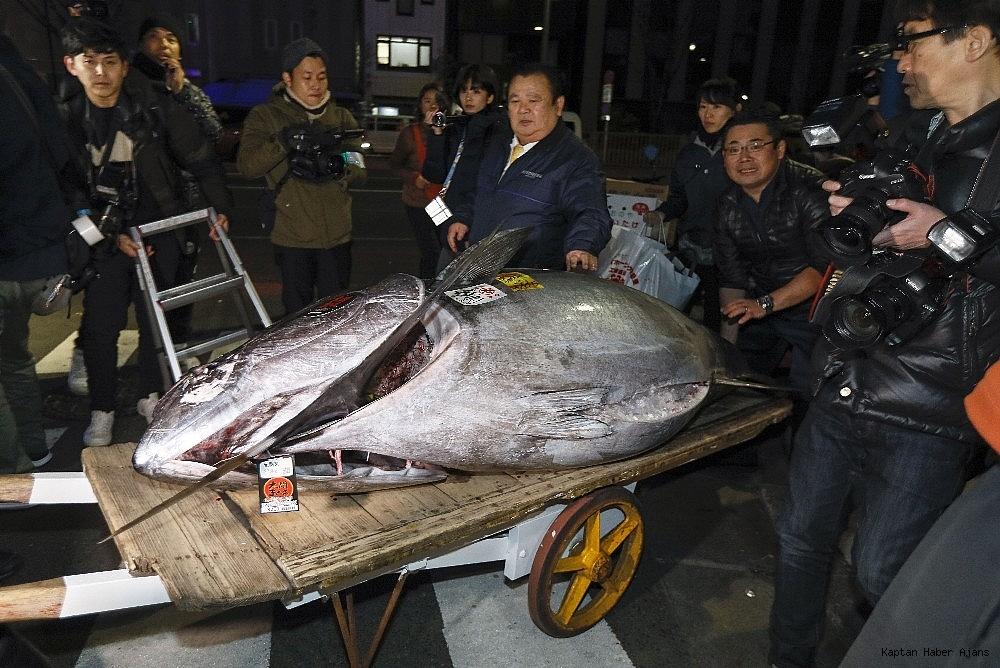 2019/01/tokyoda-balik-mezatinda-rekor-fiyat-16-milyon-liraya-satildi-20190105AW58-1.jpg