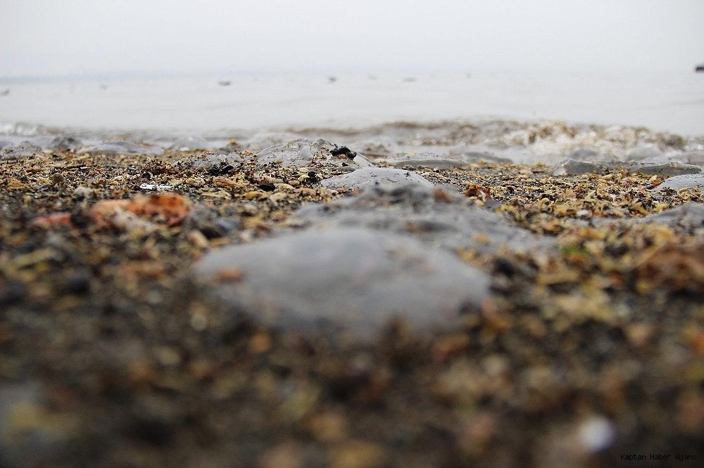 2019/02/izmit-korfezinde-sahili-kaplayan-yuzlerce-denizanasi-gorenleri-sasirtti-20190206AW61-2.jpg