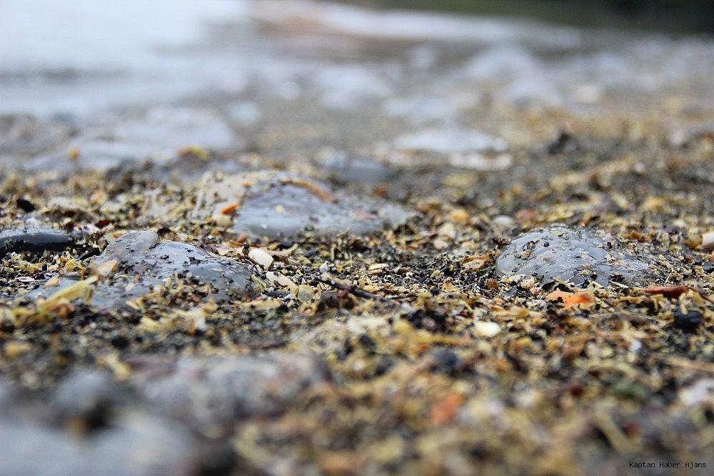 2019/02/izmit-korfezinde-sahili-kaplayan-yuzlerce-denizanasi-gorenleri-sasirtti-20190206AW61-4.jpg