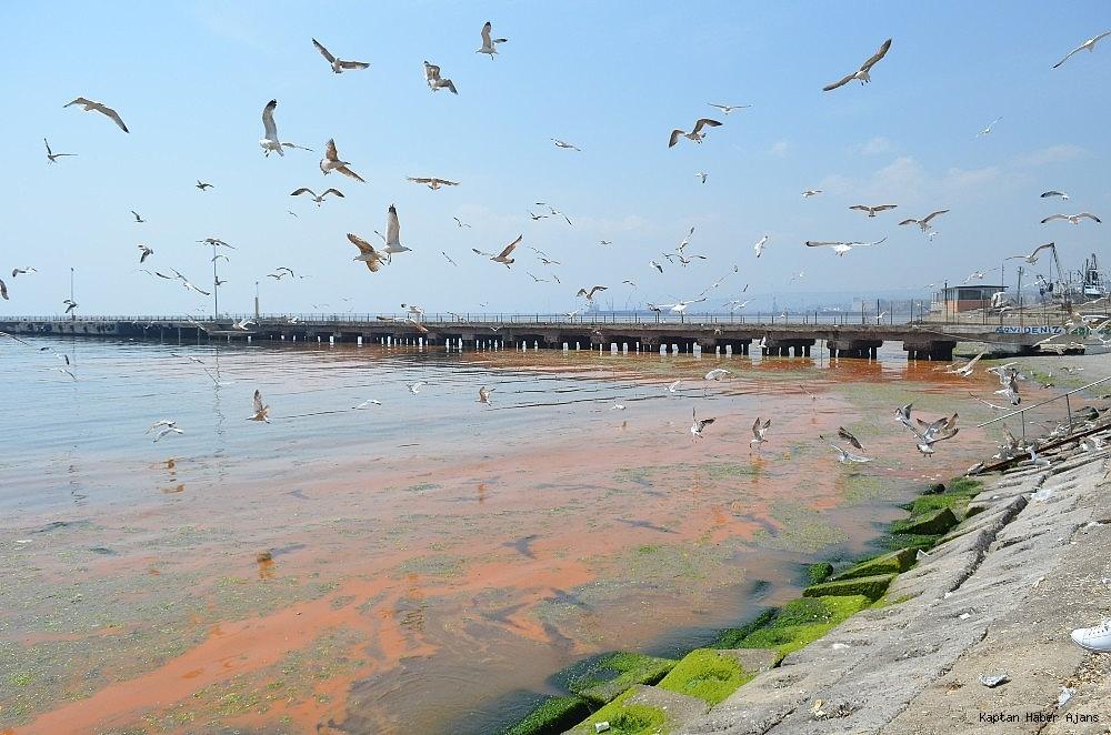 2019/04/marmara-denizindeki-turunculuk-buyuk-oranda-normale-dondu-20190429AW68-8.jpg