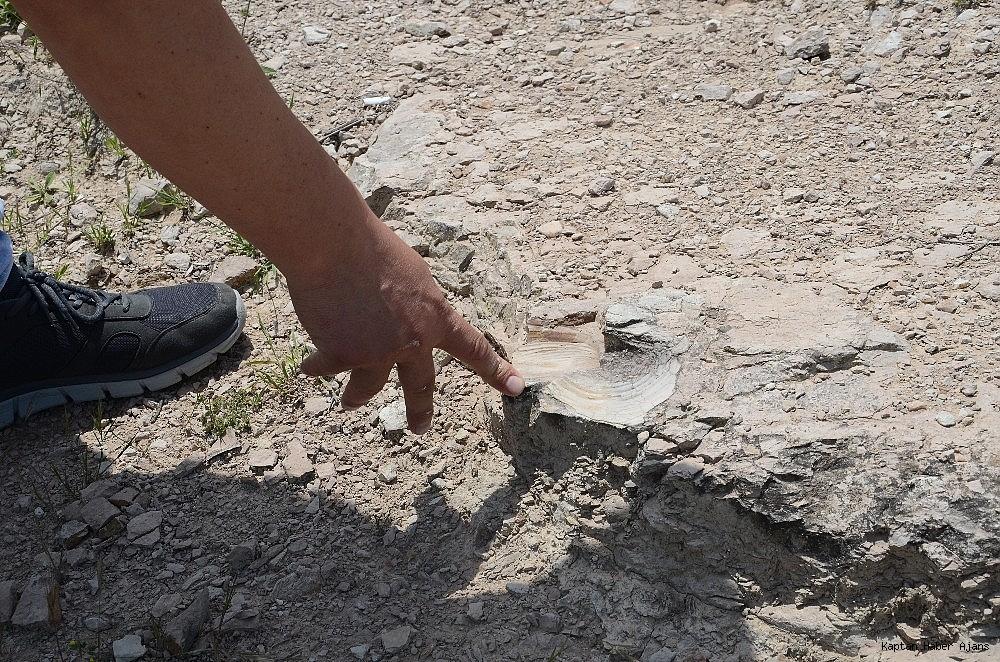 2019/05/zonguldakta-dinazor-cagi-deniz-canlilarina-ait-fosil-bulundu-20190530AW71-2.jpg