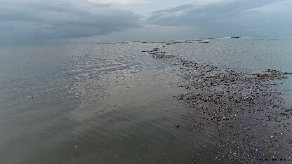 2019/06/trabzonda-siddetli-yagislar-sonrasi-deniz-camura-bulandi-derelerin-getirdigi-agac-parcalari-ile-doldu-20190621AW73-4.jpg