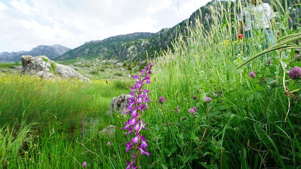 2020/05/cicek-acan-yabani-orkideler-gorsel-solen-sunuyor-20200519AW02-5.jpg