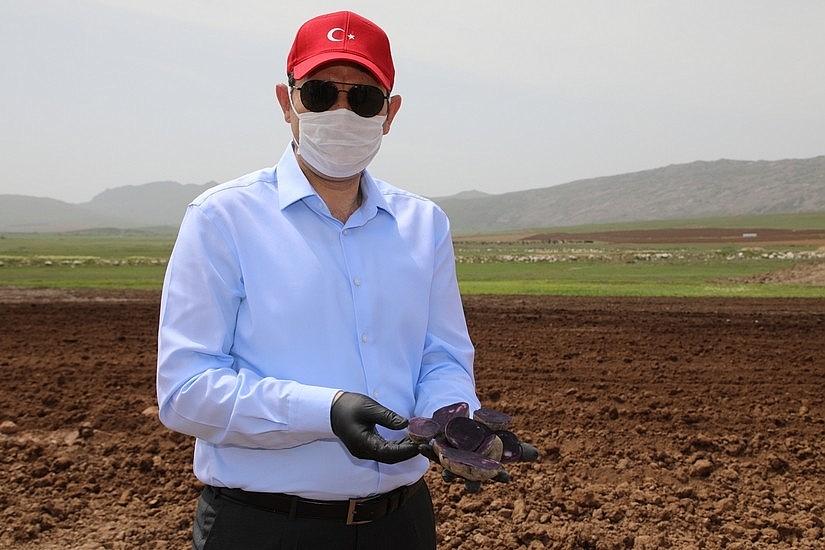 2020/05/sivasta-mor-patatesin-ekimi-yapildi-20200521AW02-6.jpg