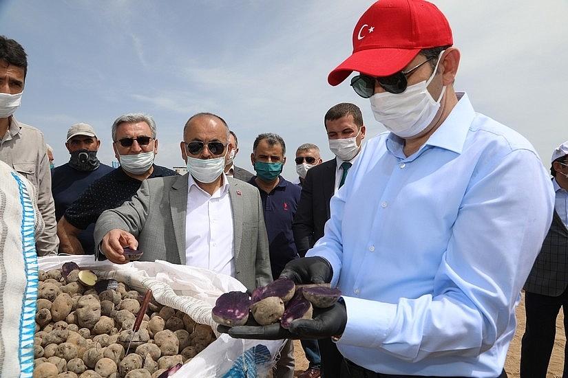 2020/05/sivasta-mor-patatesin-ekimi-yapildi-20200521AW02-7.jpg