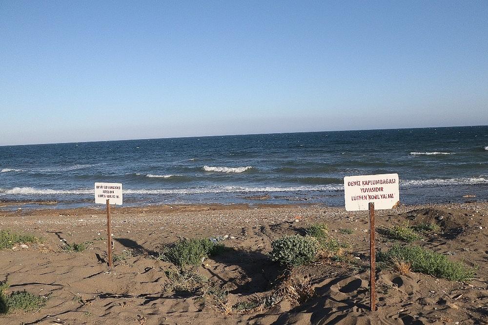 2020/06/deniz-kaplumbagalari-mersin-sahillerine-yumurta-birakmaya-basladi-20200603AW03-1.jpg