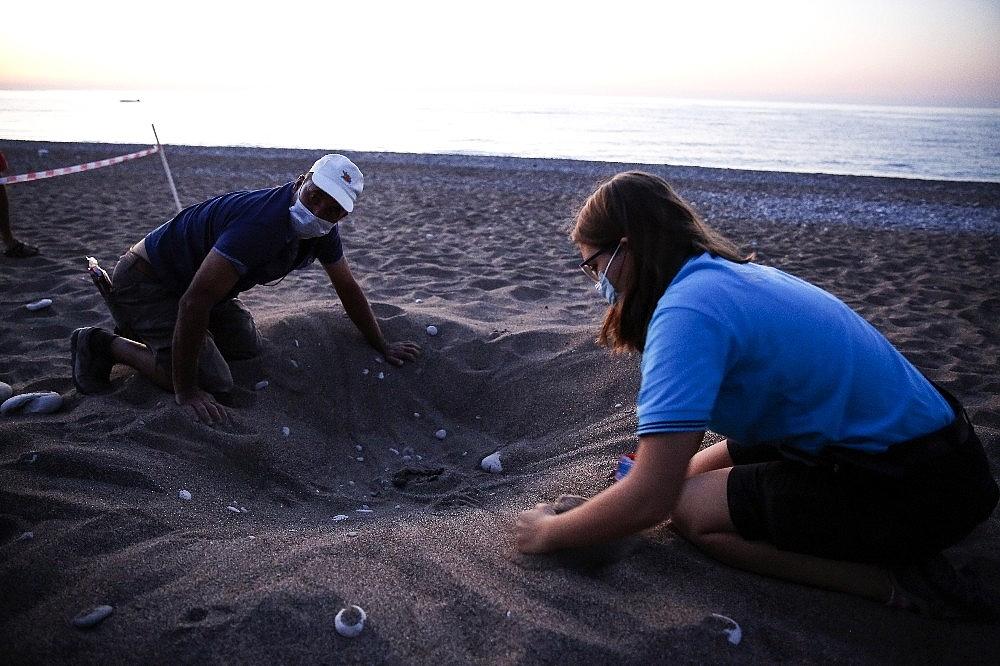 2020/08/caretta-caretta-yavrulari-denizle-bulustu-20200805AW08-3.jpg
