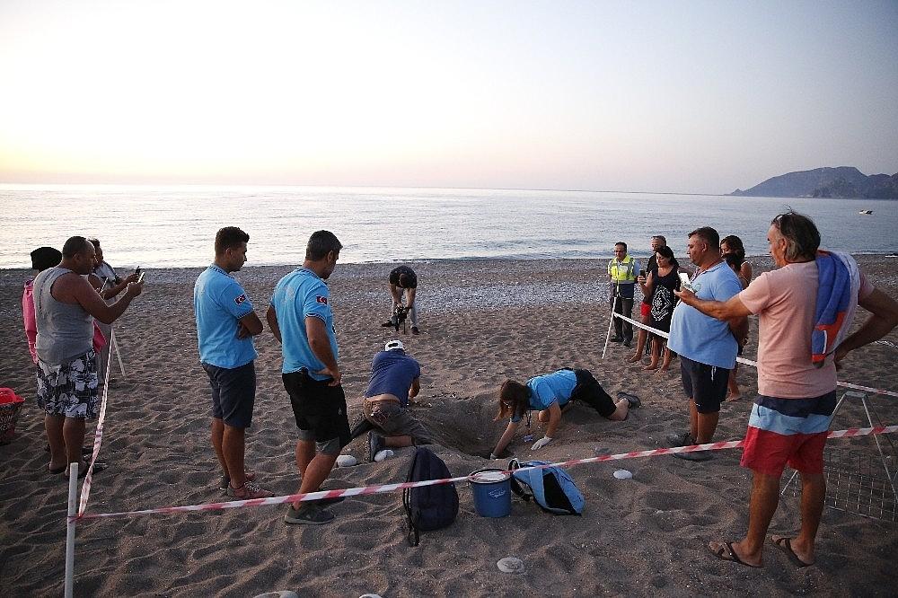 2020/08/caretta-caretta-yavrulari-denizle-bulustu-20200805AW08-4.jpg