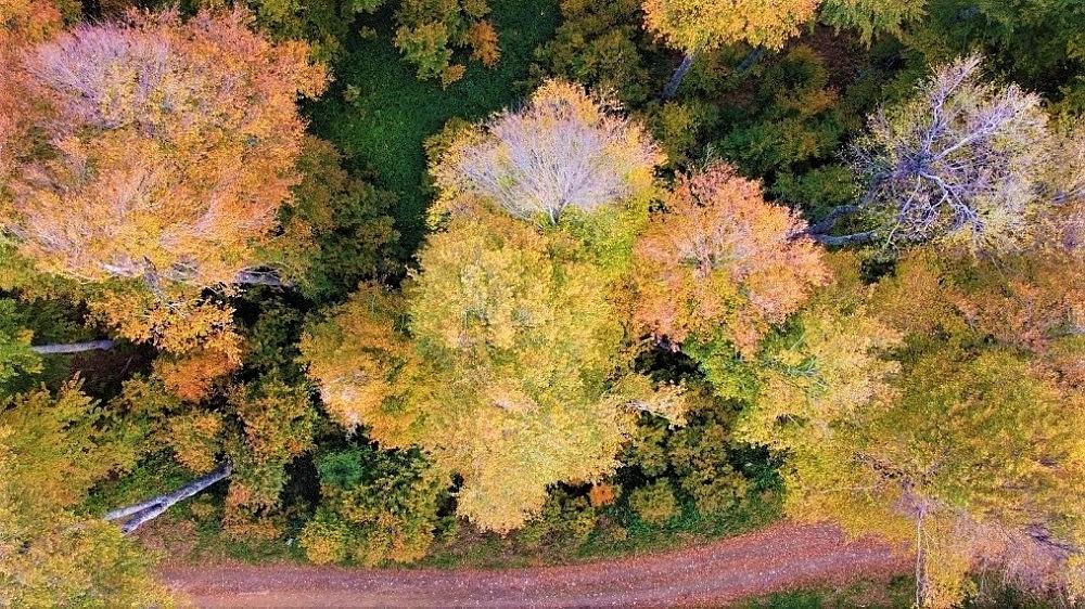 2020/10/sonbahar-renklerine-burunen-turkmen-dagi-mest-etti-20201030AW15-4.jpg
