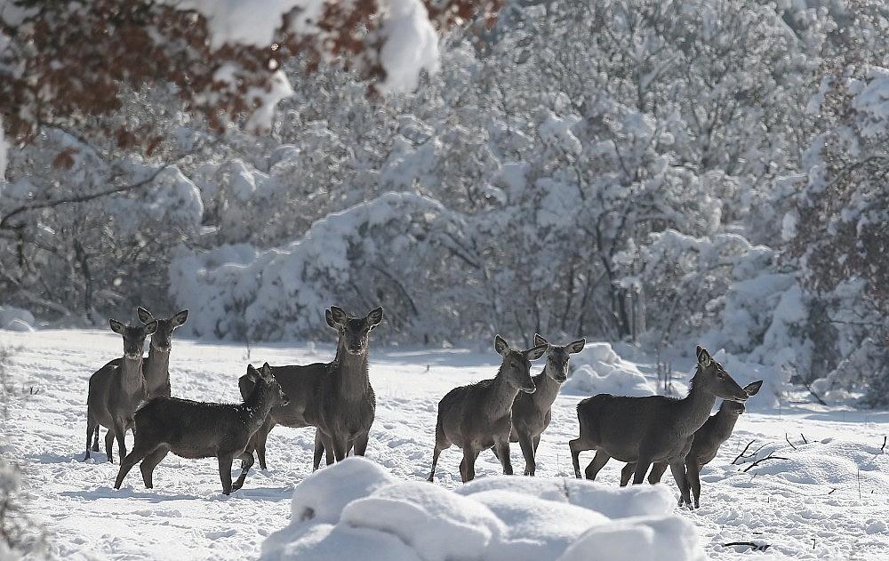 2021/01/bursadaki-kizil-geyiklere-ozel-yem-takviyesi-20210118AW21-1.jpg
