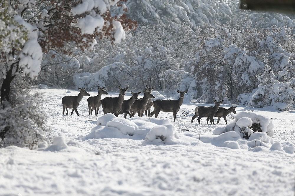 2021/01/bursadaki-kizil-geyiklere-ozel-yem-takviyesi-20210118AW21-5.jpg