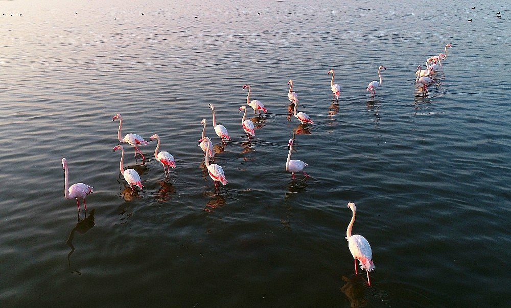 2021/01/doga-harikasi-lagun-hem-flamingolari-hem-de-fotografseverleri-agirliyor-20210118AW21-1.jpg