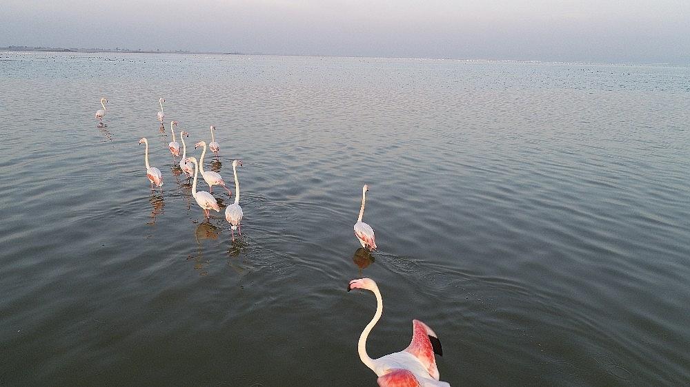 2021/01/doga-harikasi-lagun-hem-flamingolari-hem-de-fotografseverleri-agirliyor-20210118AW21-2.jpg