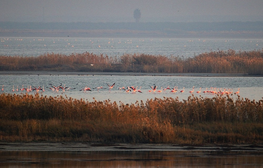 2021/01/doga-harikasi-lagun-hem-flamingolari-hem-de-fotografseverleri-agirliyor-20210118AW21-3.jpg