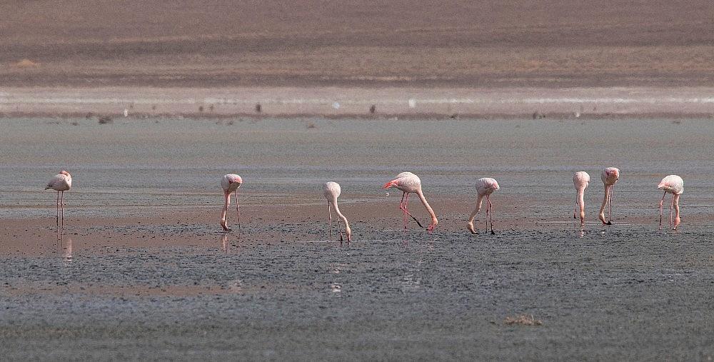 2021/03/duden-golundeki-flamingo-sayisi-dustu-20210308AW26-1.jpg