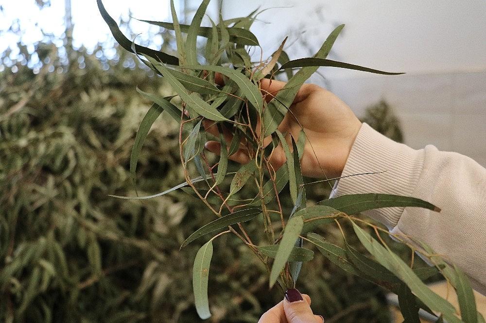 2021/03/endemik-bitkiler-eterik-yag-ihracatini-arttiracak-20210315AW26-1.jpg