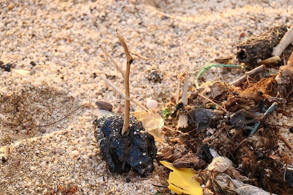 2021/03/sahilde-ayaklara-yapisan-zift-saskina-cevirdi-20210319AW27-1.jpg