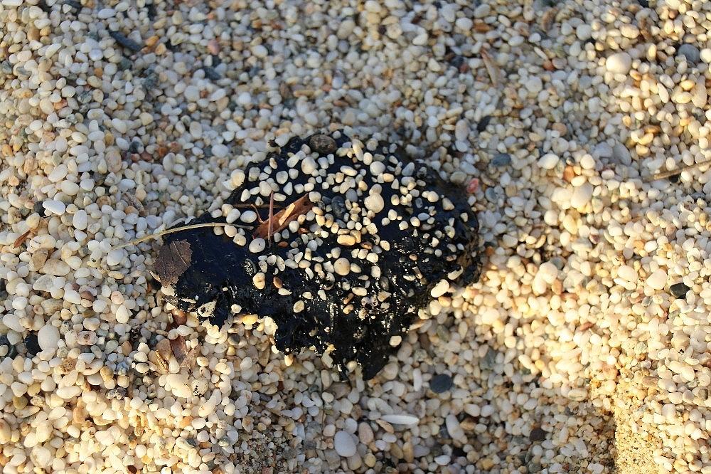 2021/03/sahilde-ayaklara-yapisan-zift-saskina-cevirdi-20210319AW27-3.jpg