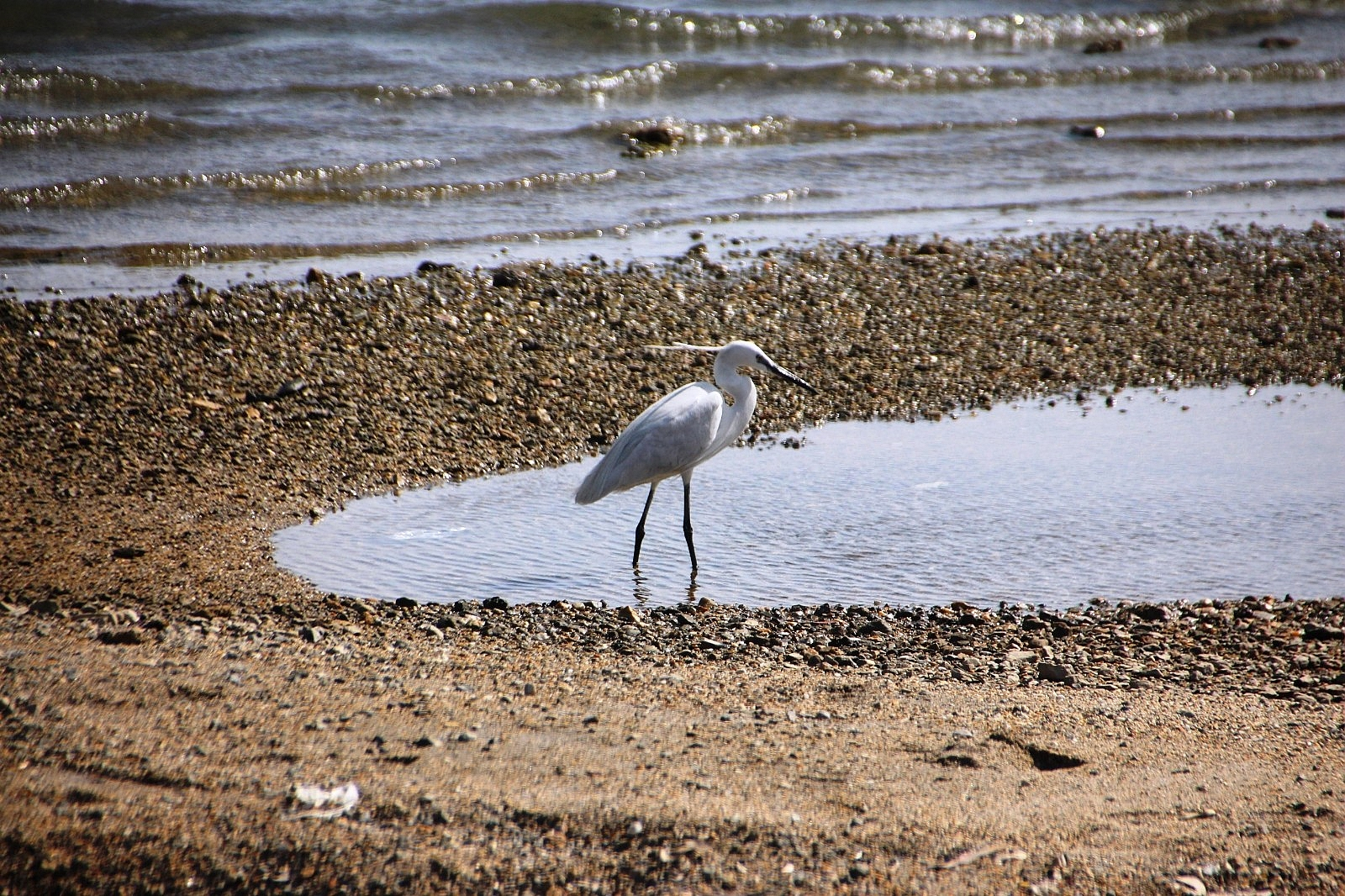 2021/05/sahiller-bos-kalinca-yaban-hayvanlari-sahillere-gelmeye-basladi-20210510AW31-1.jpg