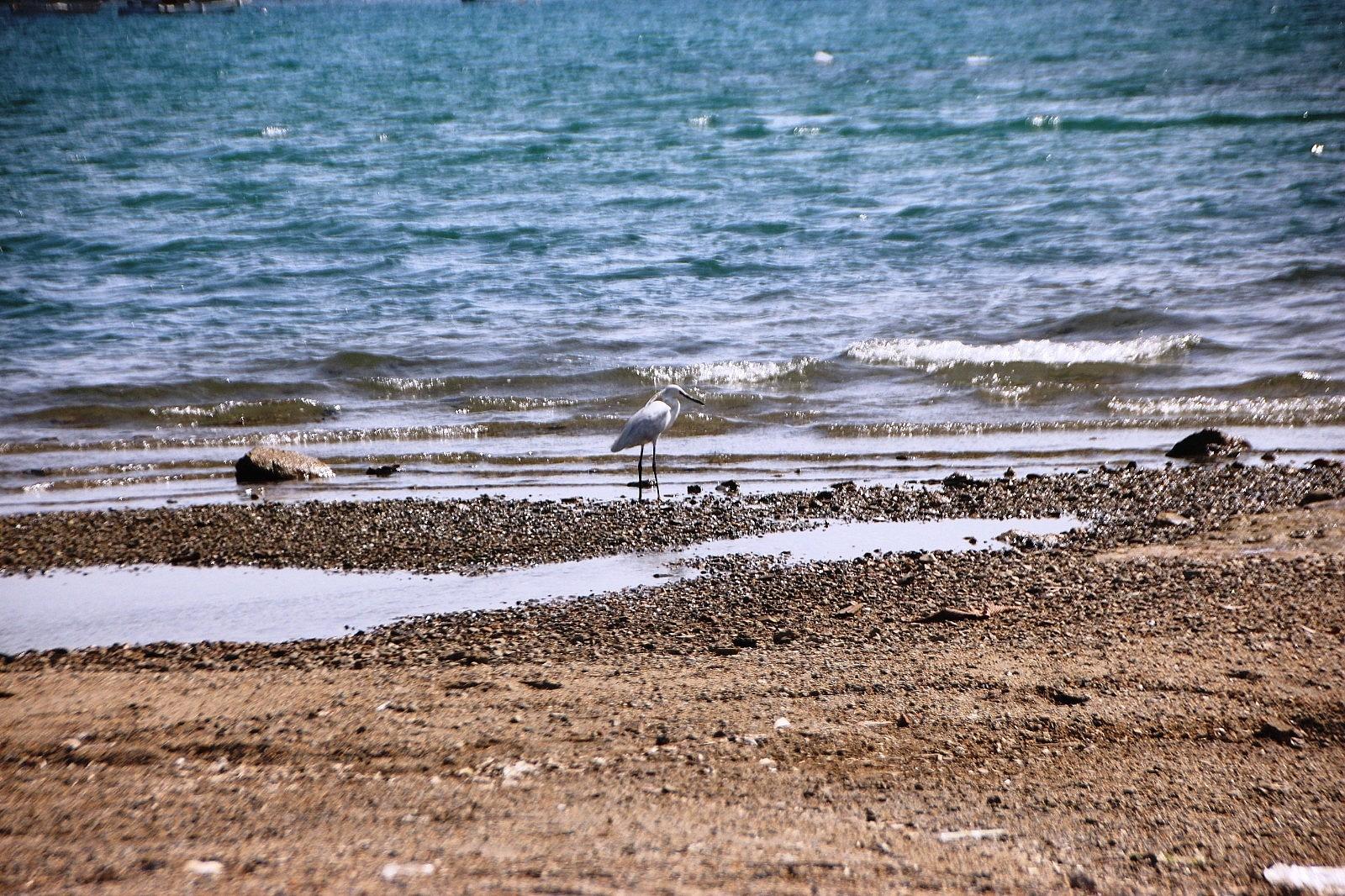 2021/05/sahiller-bos-kalinca-yaban-hayvanlari-sahillere-gelmeye-basladi-20210510AW31-2.jpg