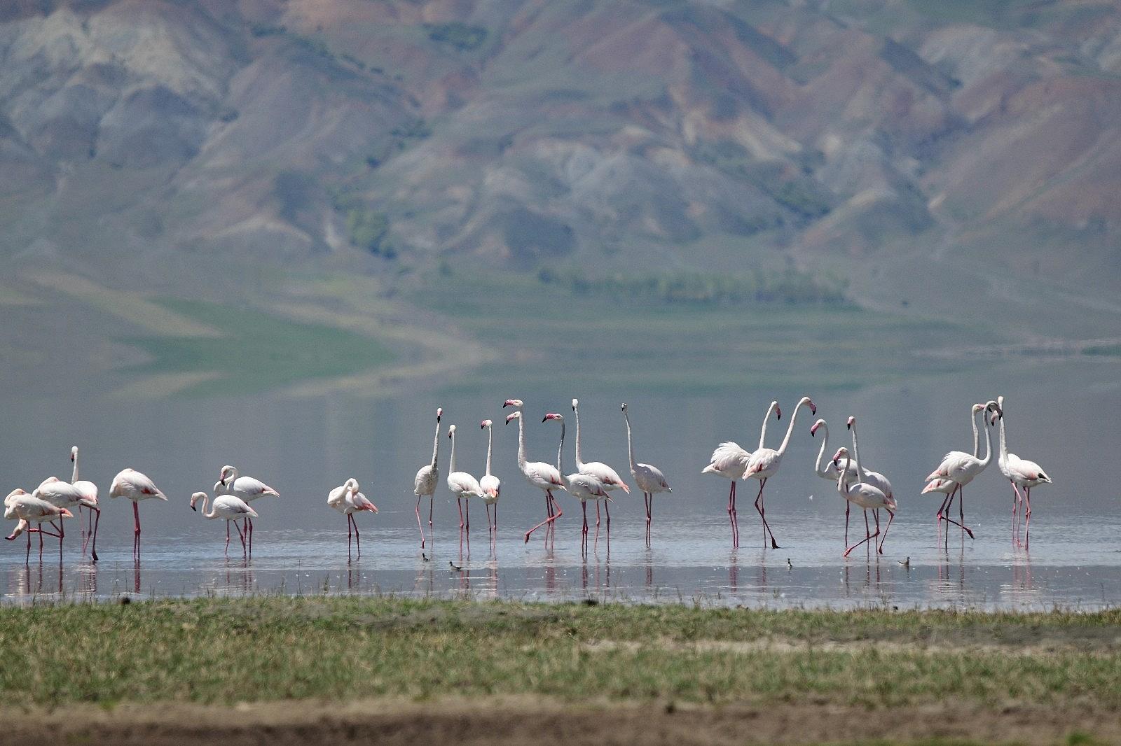 2021/05/van-golu-havzasinin-narin-kuslari-flamingolar-20210510AW31-2.jpg