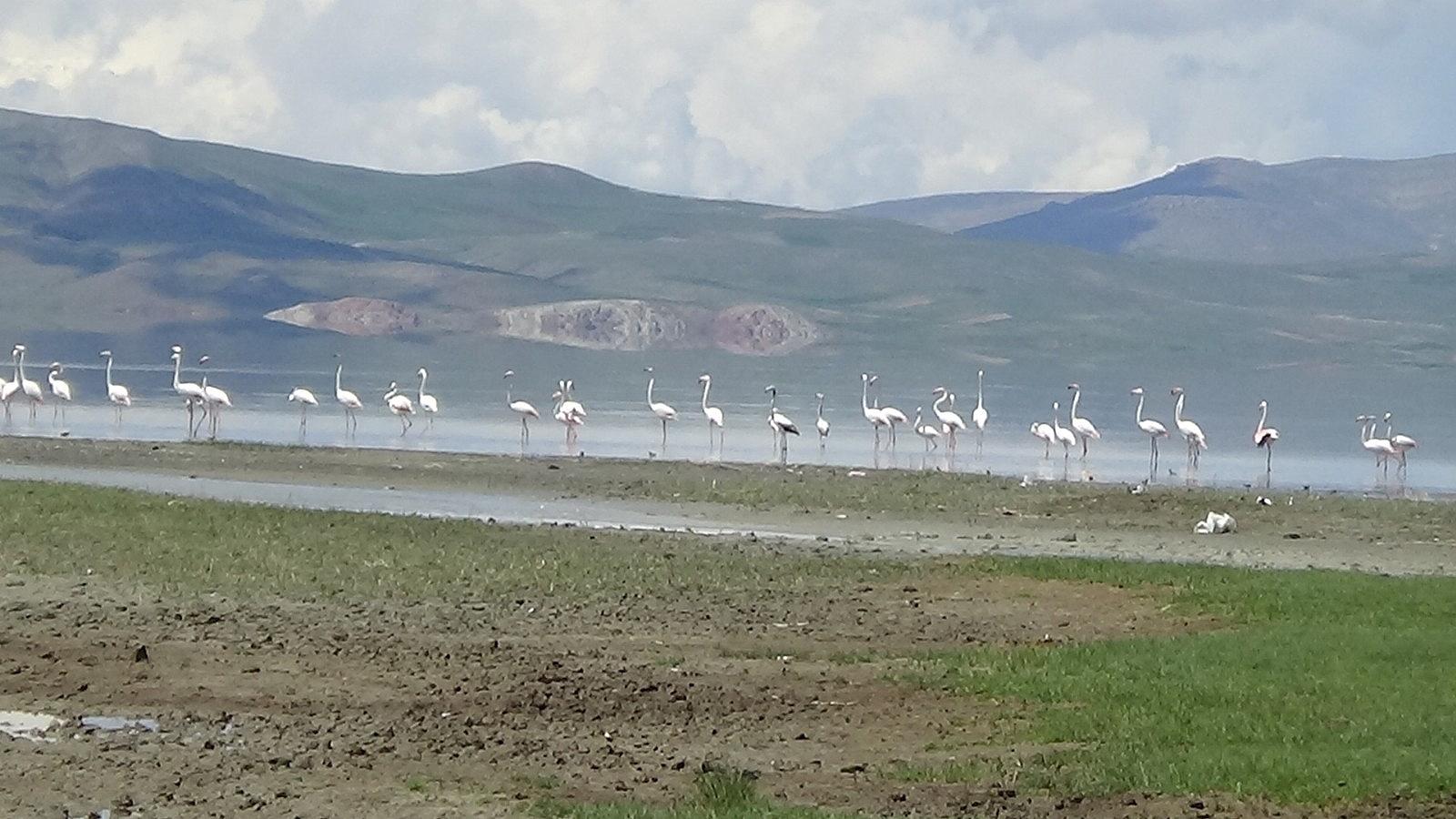 2021/05/van-golu-havzasinin-narin-kuslari-flamingolar-20210510AW31-6.jpg