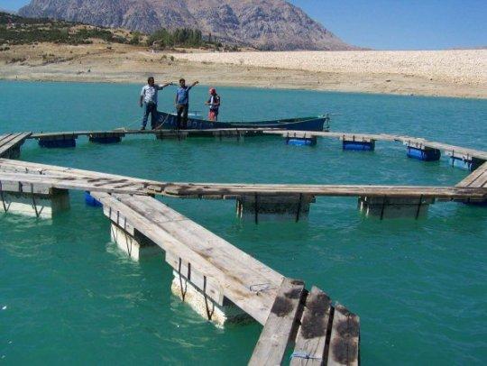 Su Ürünleri Sektörü Sürekli Gelişiyor