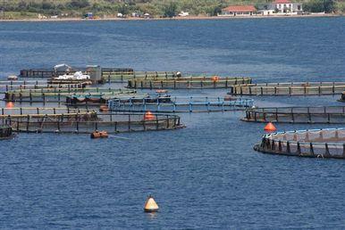 Milas'ta balık üretimine yabancı ortak