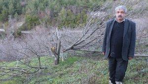72 meyve ağacını kestiler