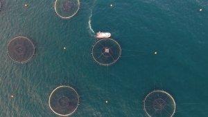 Başkan Ergül'den balık kafesleri eleştirisi