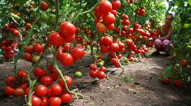 Abhazya Rusya'ya sebze ihracatında rekor kırdı
