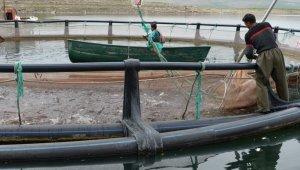 Kayseri'nin denizi yok ama balık ihracatı çok