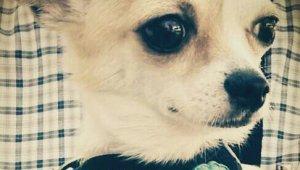 İnternetten tanıştığı şahsa köpeğini emanet eden 13 yaşındaki genci hastanelik oldu