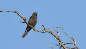 Karacabey Longozu'nda 270.tür böyle kaydedildi