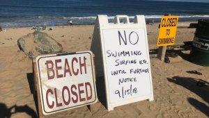 ABD'de köpek balığı saldırısı: 1 ölü