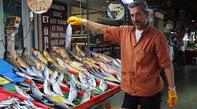 Deniz balıkları, denize kıyısı olmayan şehirlerde yerini almaya başladı