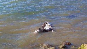 Denizde bulunan eşekle ilgili flaş gelişme