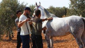 Suriye'de At Festivali düzenlendi