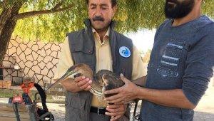 Yaralı Erguvani balıkçıl kuşu tedavi altına alındı