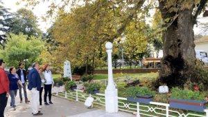 Atatürk'ün 400 yaşındaki çınar ağacı bakıma alındı
