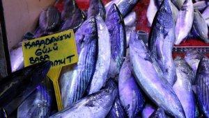 Balık, Karadeniz'den Ege ve Akdeniz'e göç ediyor