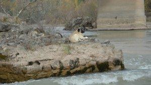 Nehrin ortasında mahsur kalan köpek, kurtarma ekiplerine zor anlar yaşattı