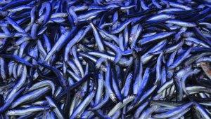 Balık fiyatlarında artış başlıyor